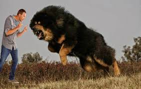 top 10 guard dogs in india youtube