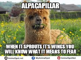 Alpaca Meme - alpaca memes