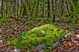 floor in the forest floor
