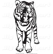 big cat vector clipart of a standing black and white tiger with