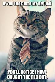 Business Cat Memes - business cat resume funny pics memes captioned pictures