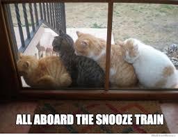 Sleepy Cat Meme - pvt cerberus s content page 9 mlp forums