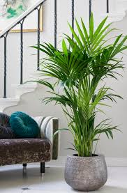 Plants Home Decor 9 Chic Plants For Your Home That Will Bring A Fresh Vibe Into Any
