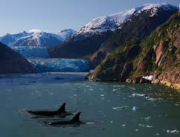 file killer whales and a glacier jpg wikimedia commons