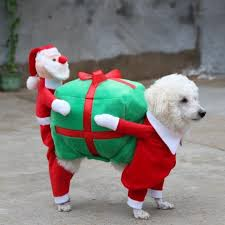 Christmas Dog Meme - 9 insanely funny dog christmas card fails and 1 perfect one