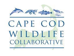 cape cod wildlife festival national marine life center