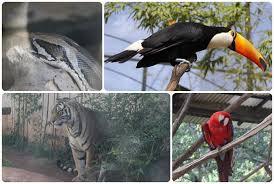 O Blog voltou ao Zoo Park da Montanha, e ele está ainda mais ...