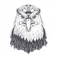 eagle vectors photos and psd files free download