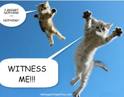 Mad Cat Memes - mad cat max witness me know your meme