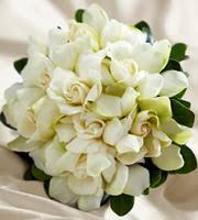 albuquerque florist albuquerque florist in albuquerque nm 1416 juan tabo blvd ne