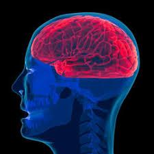 Blood Brain Barrier Anatomy Blood Brain Barrier Hms
