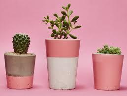 small pink concrete planter cactus succulent u2013 hi cacti