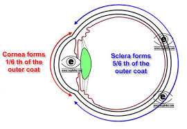 Eye Anatomy And Physiology Anatomy Of Sclera By Dr Parthopratim Dutta Majumder