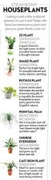 Inside Plants by 25 Best House Plants Images On Pinterest Indoor Gardening
