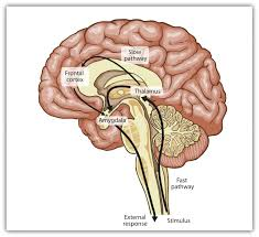 Part Of Brain That Controls Arousal 10 1 The Experience Of Emotion Introduction To Psychology