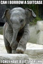Elephant Meme - 13 hilarious elephant memes i can has cheezburger funny