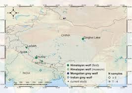 Himalayan Mts Map Ancient Himalayan Wolf Open Science