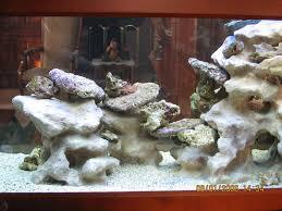 idee deco aquarium aquaplum u0027 coraux fabrication d u0027aquariums