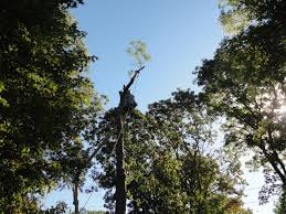 long island tree service and lawn care tree service lawn care