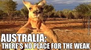 Australia Meme - australia there s no place for the weak funny kangaroo meme picture