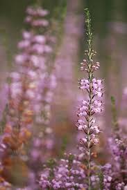 21 best cold weather plants images on pinterest flower plants