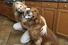 Comfort Golden Pets Sense Cues To Comfort The Sick Dying Or Grieving Chicago