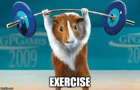 Exercise Meme - why do some people sweat more than others 盪 science abc