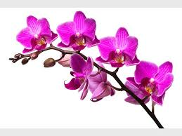 Orchids Care Orchid Care For Beginners Joburg East Express