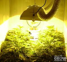 plant light for weed marijuana grow lights led hps cfl