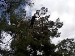 ultimate tree cuts odessa tx 79764 yp com