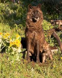 Wyoming wildlife tours images 183 best wildlife of wyoming images wild animals jpg