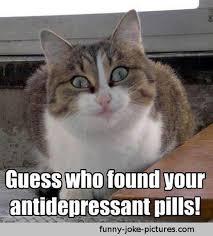 Funny Memes About Cats - 21 funny cat captions random funny cat