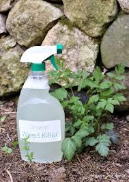 best 25 weed killers ideas on pinterest weed killer natural