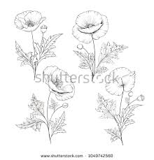 wedding flowers drawing vintage poppy set wedding flowers bundle stock vector 1049742560