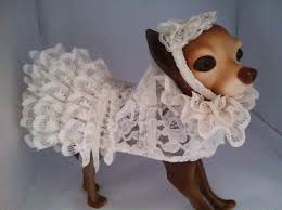 dog wedding dress modern style dog wedding dress with dogs in wedding dresses dog