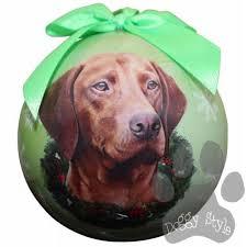 509 best vizsla images on hungarian vizsla dogs