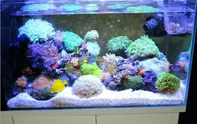 led reef lighting reviews aquarium lighting reviews led aquarium lighting reviews 2014