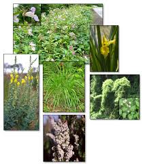 portland native plant list non native and invasive plants in the lower coos watershed