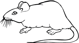 coloring page of a rat rat 19 coloring page free printable coloring pages