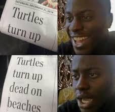 Turn On Memes - put me like turtles turn up
