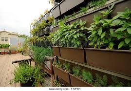 rooftop vegetable garden stock photos u0026 rooftop vegetable garden