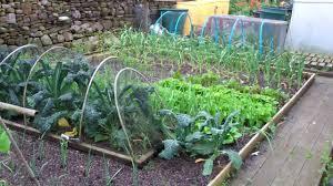allotment diary july 1 vegetable plot polytunnel giant pumpkin