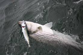 5 ways to fish live bait on cape cod