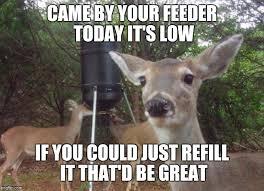 Oh Deer Meme - deer imgflip