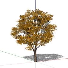 want to import plants from overhead view sketchup sketchup