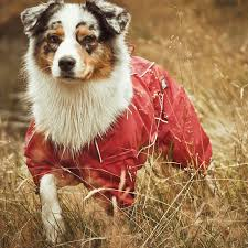 5280 australian shepherd 17 best hurtta in austrlia images on pinterest outdoor dog dog
