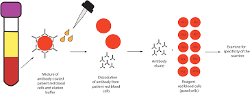 red blood cell antibodies in hematology oncology patients