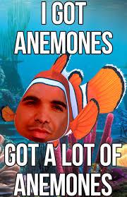 Finding Meme - drake finding nemo anemones imgur