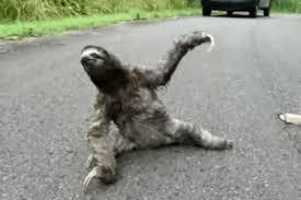 Angry Sloth Meme - anime background gif 1 gif images download
