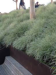 Ground Cover Plants For Slopes Round Designs